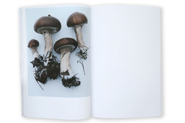 Takashi Homma, Mushrooms from the Forest (2011)