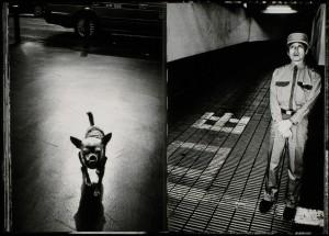 sobol-I-Tokyo-dog